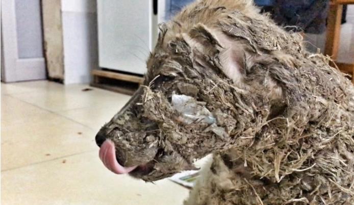 perro-rescatado-banado-en-pegamento3