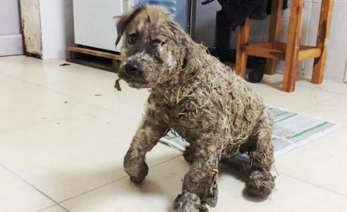 perro-rescatado-banado-en-pegamento4