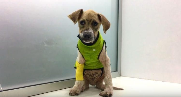 perro-rescatado-banado-en-pegamento7