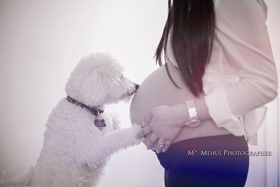 perro-y-mujeres-embarazadas-7
