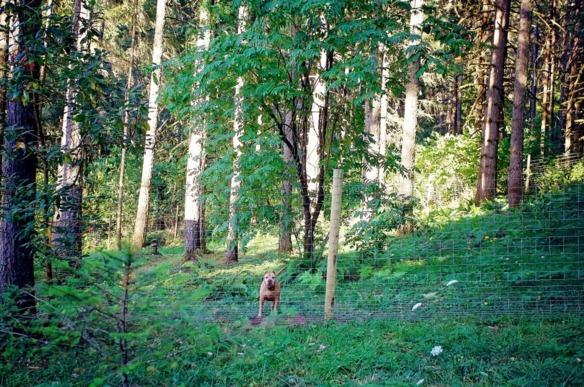 perros-casitas-en-el-bosque-4