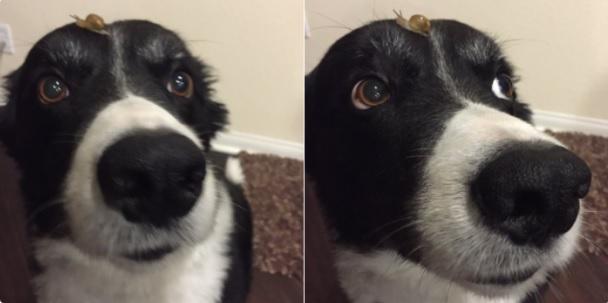 perros-perfectos-1