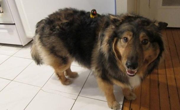 perros-perfectos-18