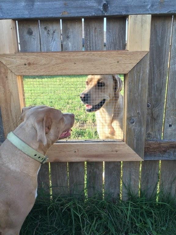 perros-perfectos-9