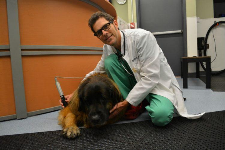 perros-terapia-acuatica-10