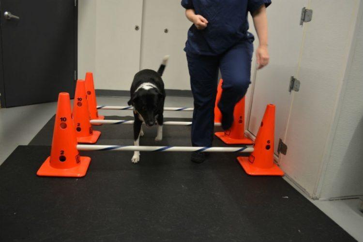 perros-terapia-acuatica-14