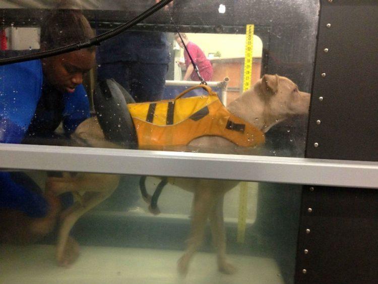 perros-terapia-acuatica-3