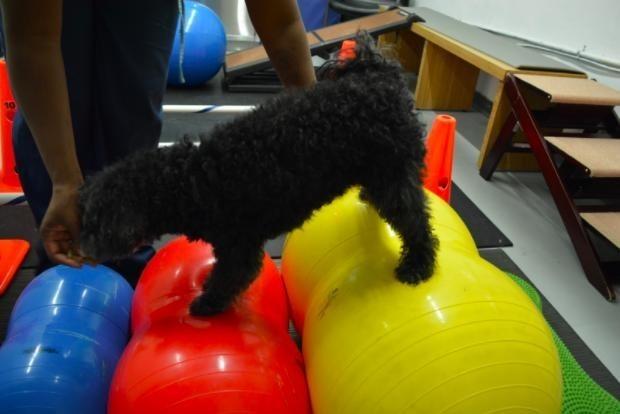 perros-terapia-acuatica-5