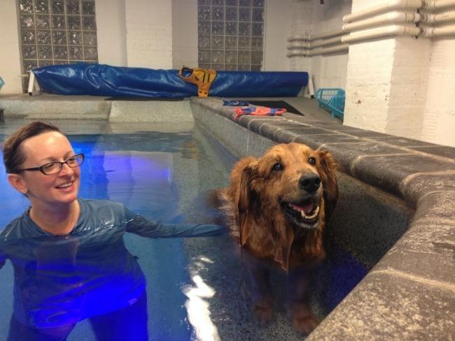perros-terapia-acuatica-6