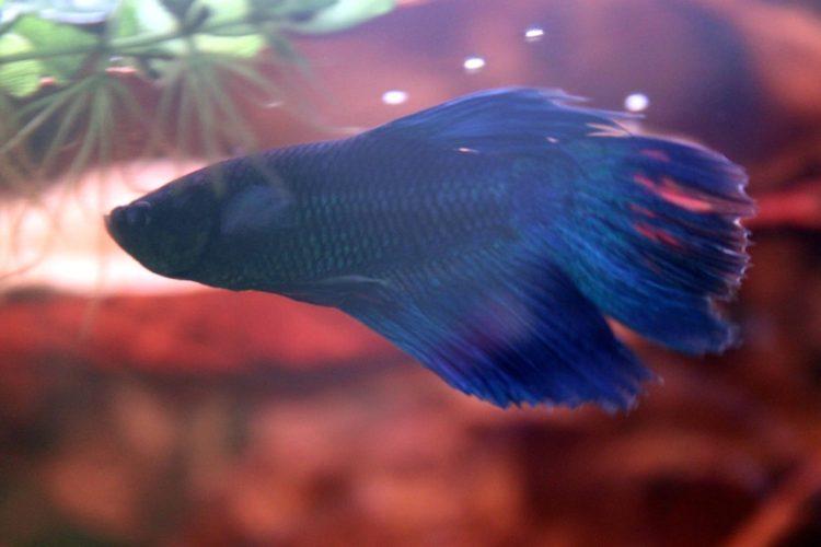 pez-cambia-vida10