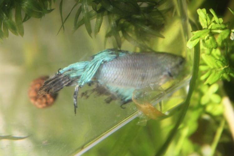 pez-cambia-vida2