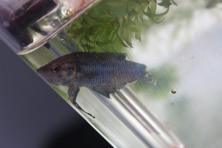 pez-cambia-vida4