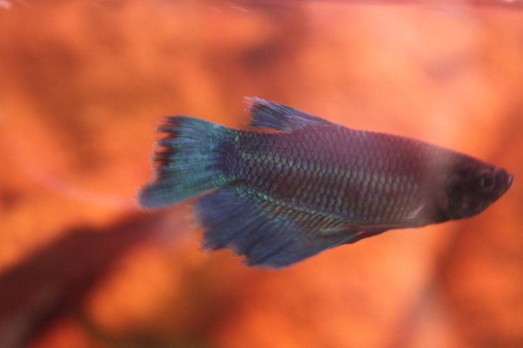pez-cambia-vida7