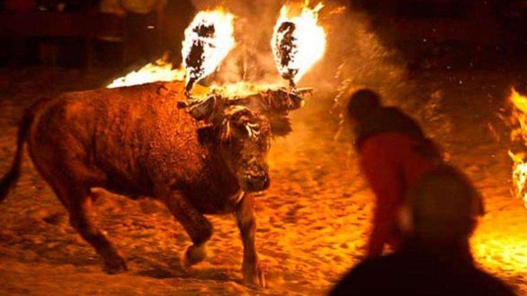 prenden-fuego-toro-de-medinaceli2