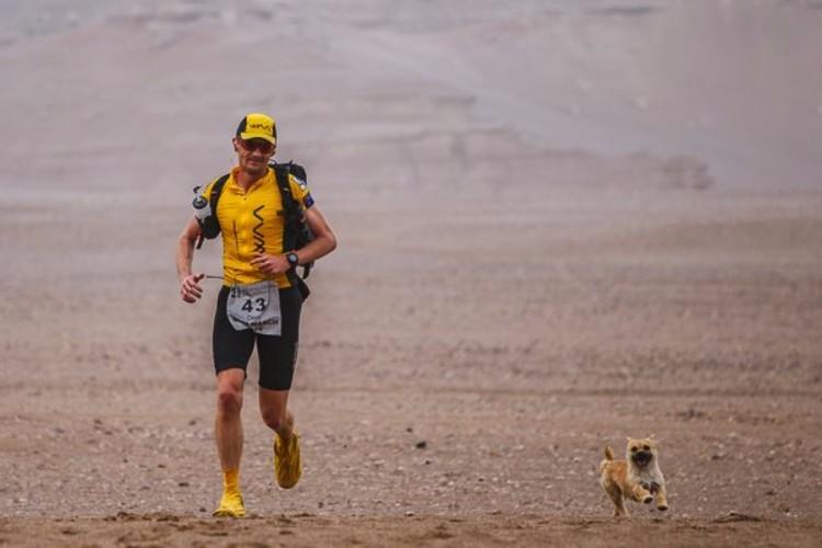 gobi-perrita-mestiza-corre-maraton-dion-leonard-04