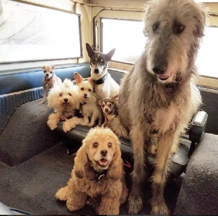 hombre-dedica-su-vida-a-adoptar-animales-viejos-que-nadie-quiere-13