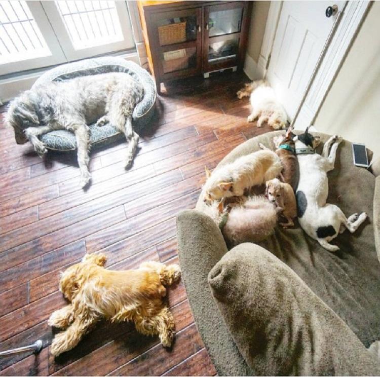 hombre-dedica-su-vida-a-adoptar-animales-viejos-que-nadie-quiere-3
