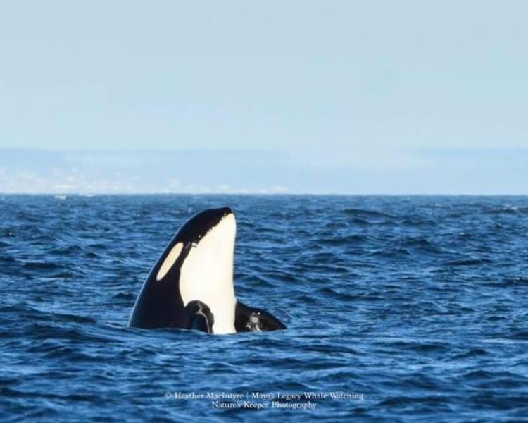 j2-granny-orca-01