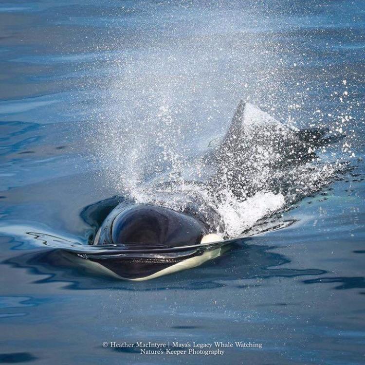 j2-granny-orca-02