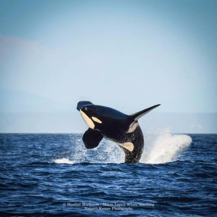 j2-granny-orca-03