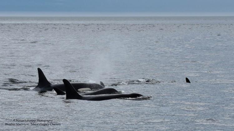 j2-granny-orca-04