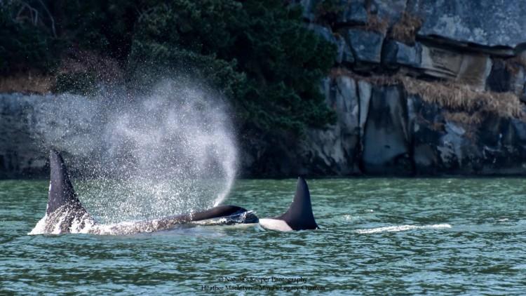 j2-granny-orca-05