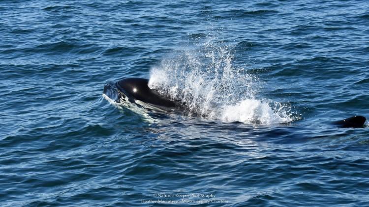 j2-granny-orca-06