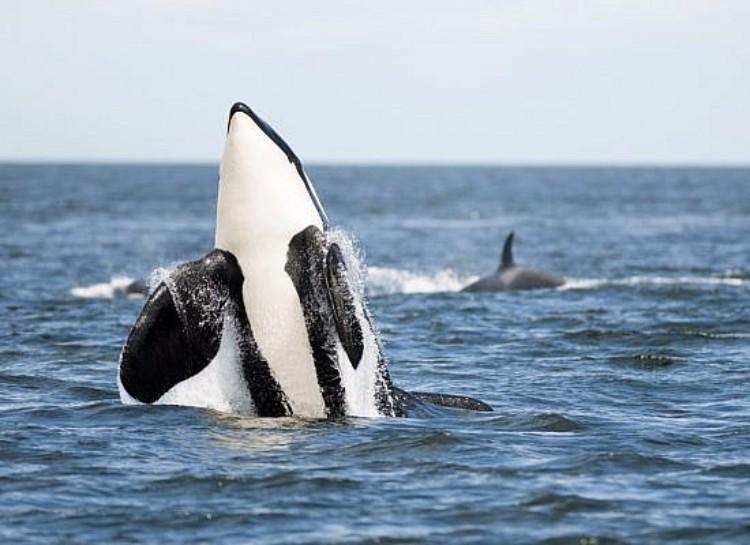 j2-granny-orca-08