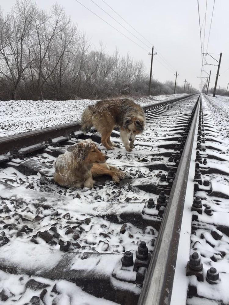 perros-no-se-abandonan-tren-ucrania-01