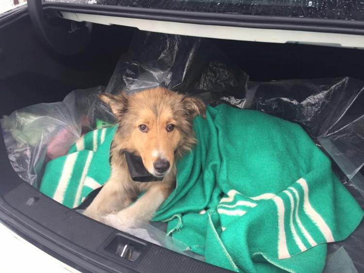 perros-no-se-abandonan-tren-ucrania-03