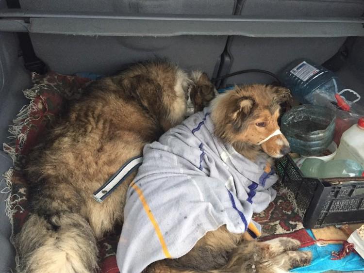 perros-no-se-abandonan-tren-ucrania-05