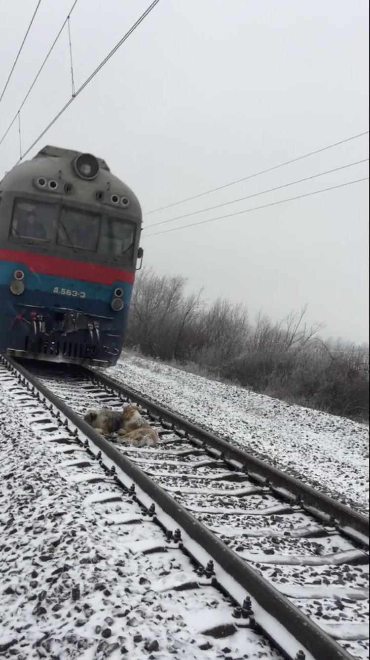 perros-no-se-abandonan-tren-ucrania-06