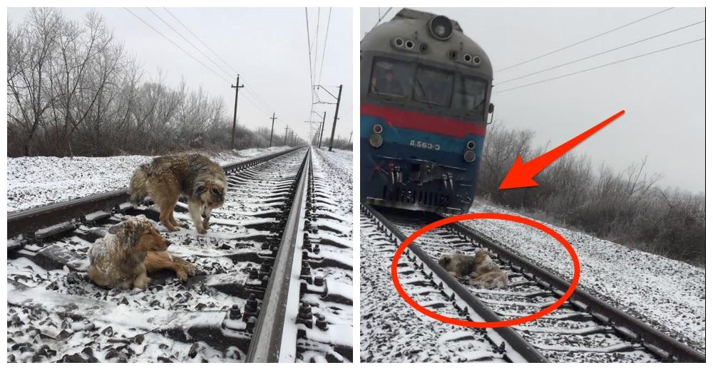 perros-no-se-abandonan-tren-ucrania-portada