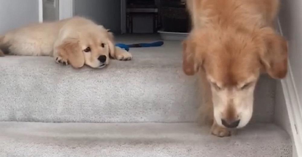portada-cachorro-tiene-una-divertida-reaccion-cuando-ve-a-su-mama-bajando-las-escaleras