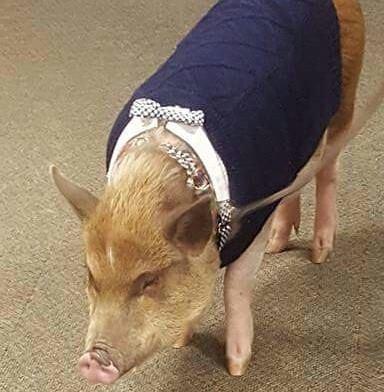 bacon-bits1