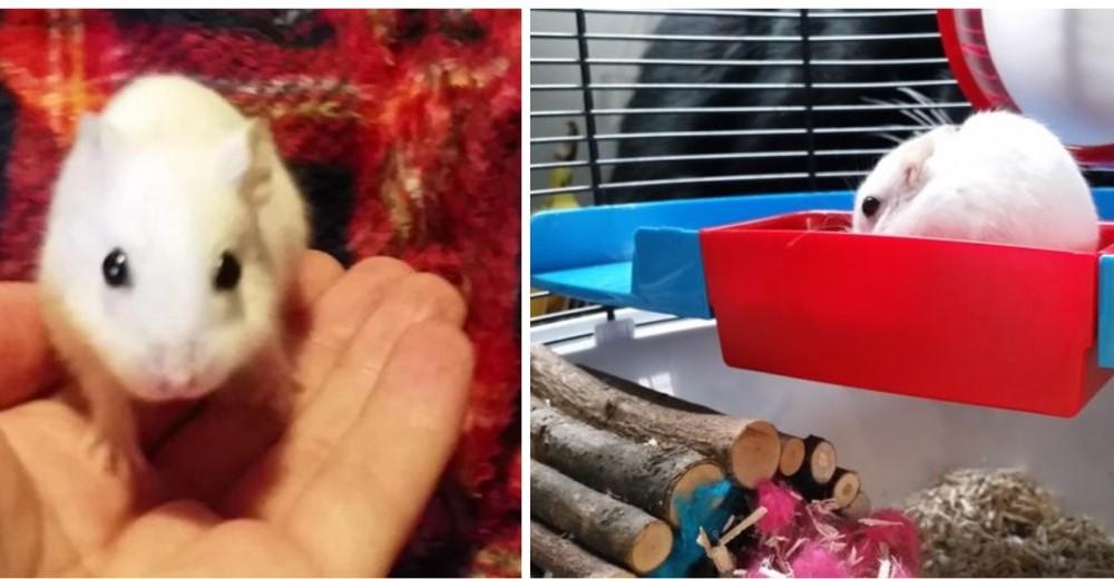hamster-rescatado