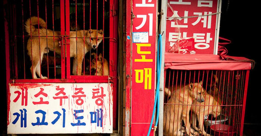 mercado-carne-perro