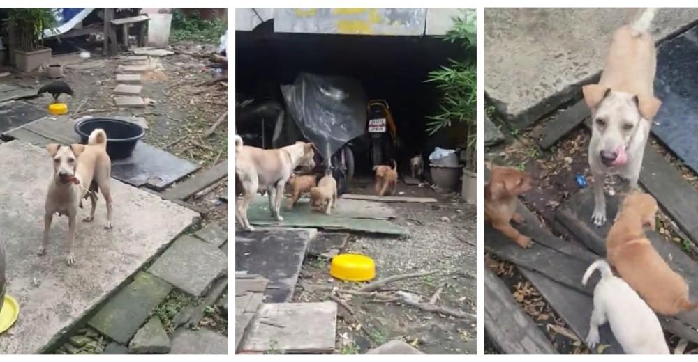 perrita-busca-comida-para-sus-cachorritos