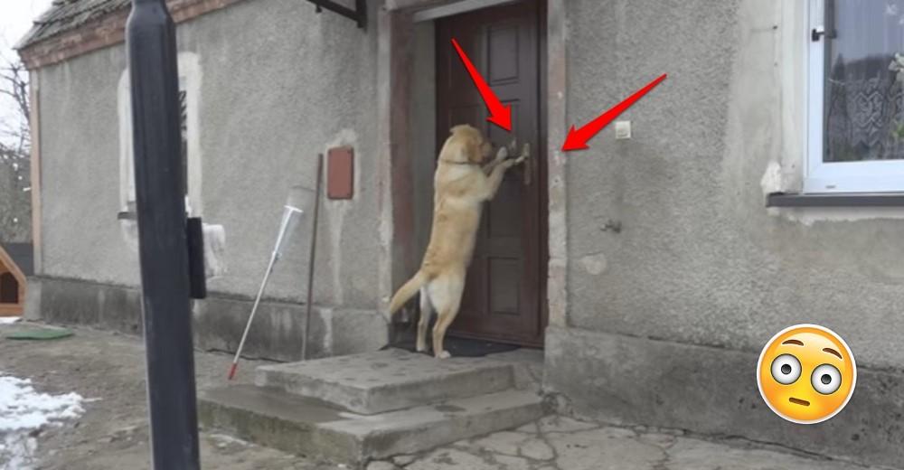 perro-abre-la-puerta-de-su-casa