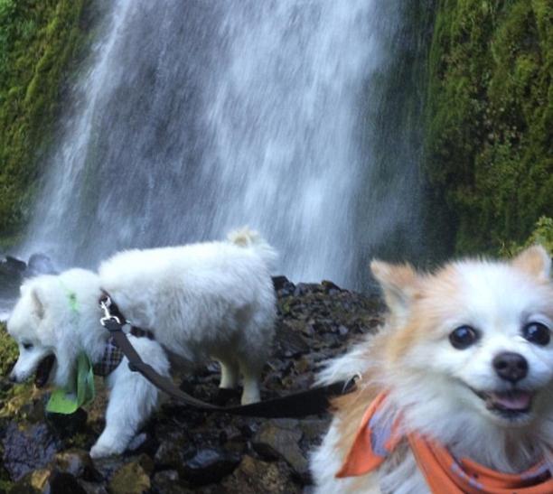 perro-ciego-es-guiado-por-su-amigo12