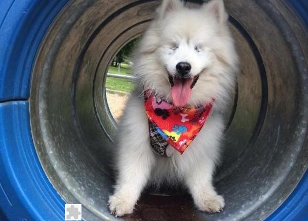 perro-ciego-es-guiado-por-su-amigo2