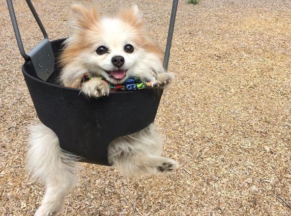perro-ciego-es-guiado-por-su-amigo3