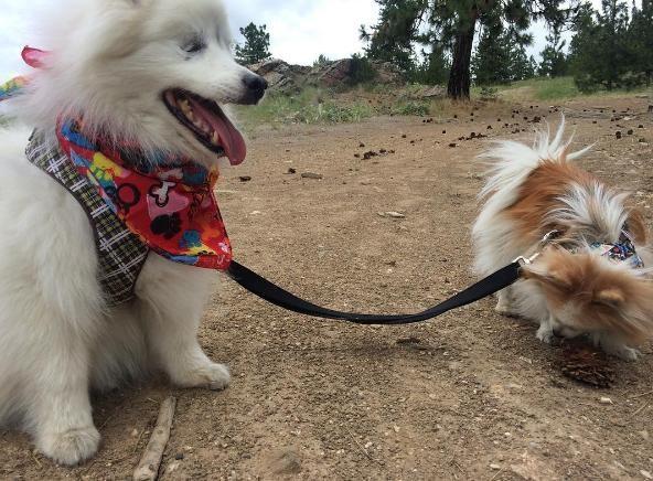 perro-ciego-es-guiado-por-su-amigo7
