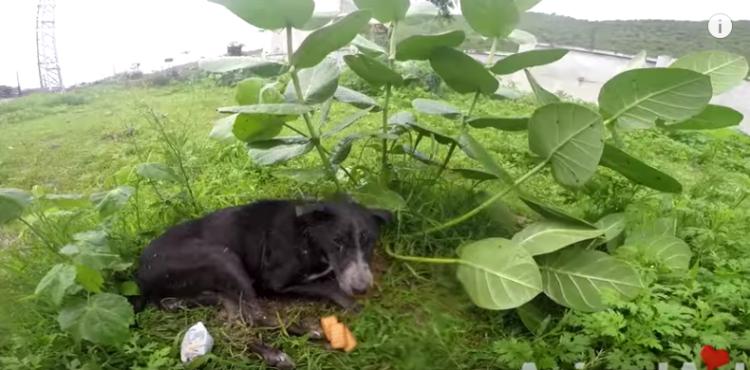 perro-lluvia1