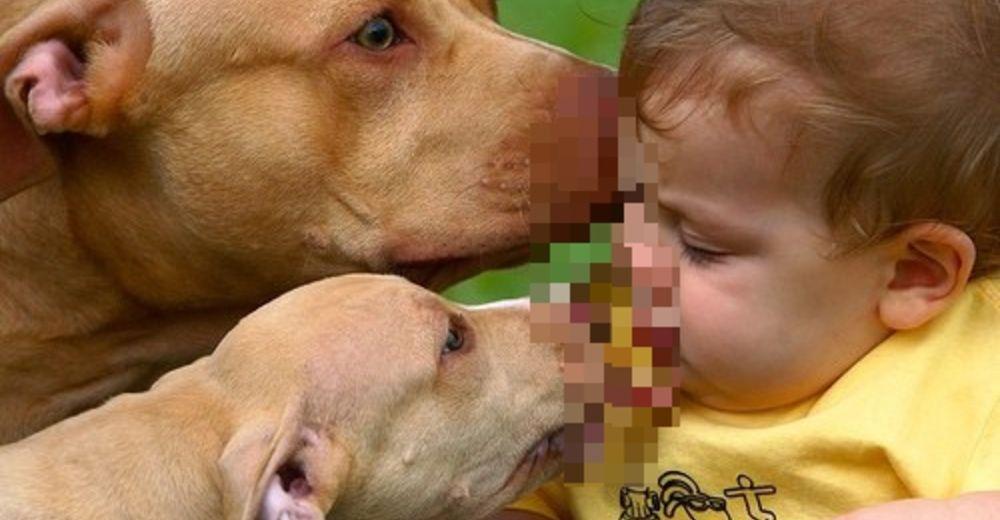 perros-imagen-destacada