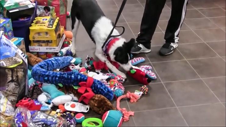 perros-regalos-1
