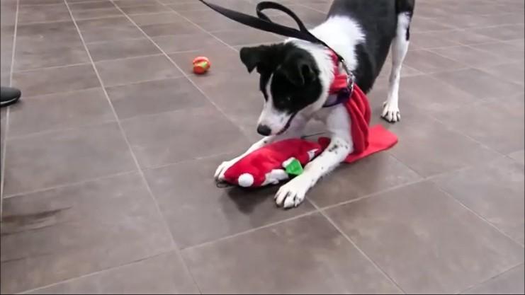 perros-regalos-2