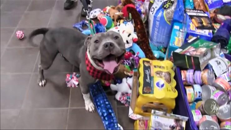 perros-regalos-3