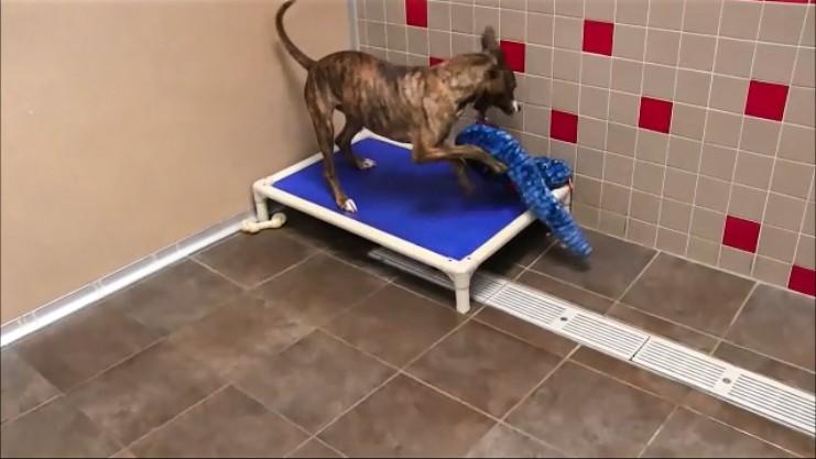 perros-regalos-4