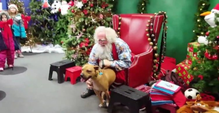pitbull-conoce-a-santa